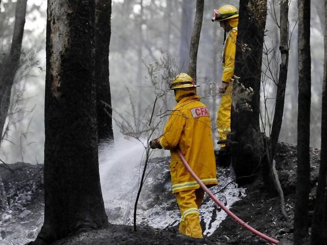 La pluie, enfin tombée en Australie, suffira-t-elle à éteindre les feux ?