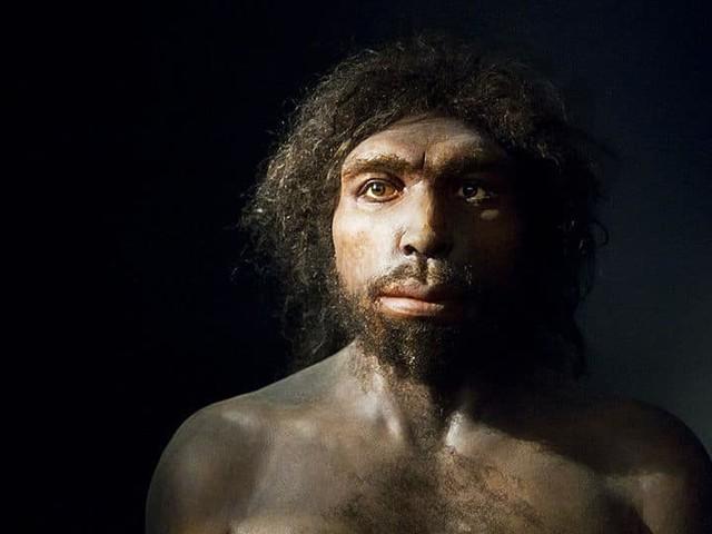 800000 ans après, un fossile humain dévoile ses secrets génétiques