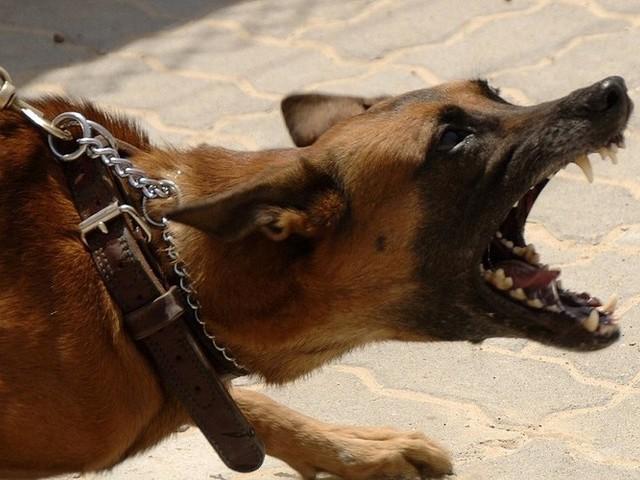 Cracher à la gueule d'un chien agressif pour le rééduquer est-il efficace ?