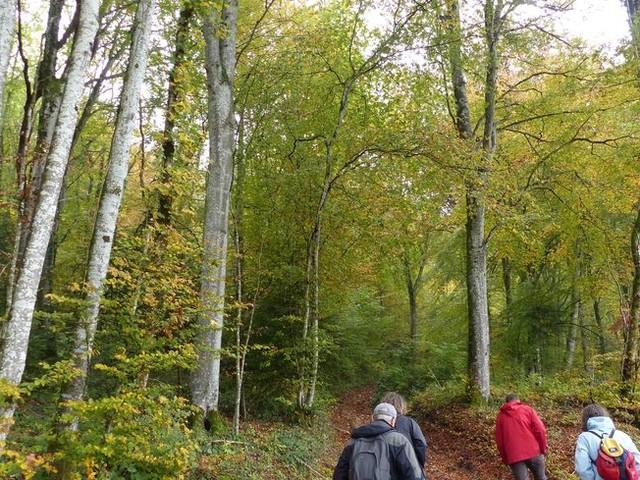Insolite : des citoyens veulent acheter une forêt près d'Arinthod