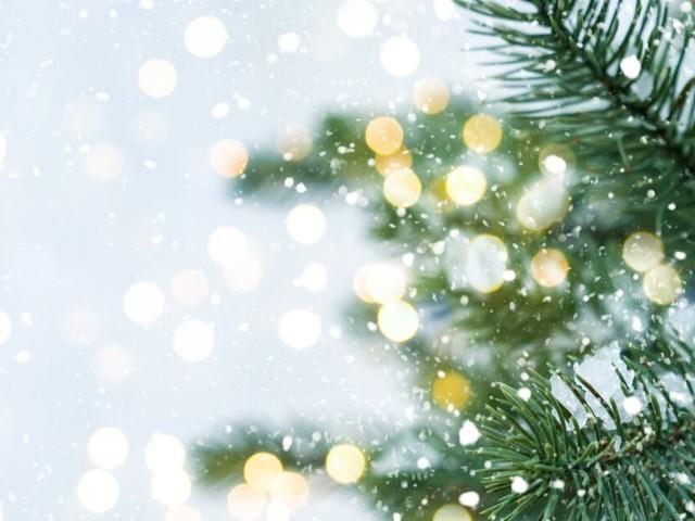 Nos sapins de Noël sont aussi victimes du réchauffement climatique