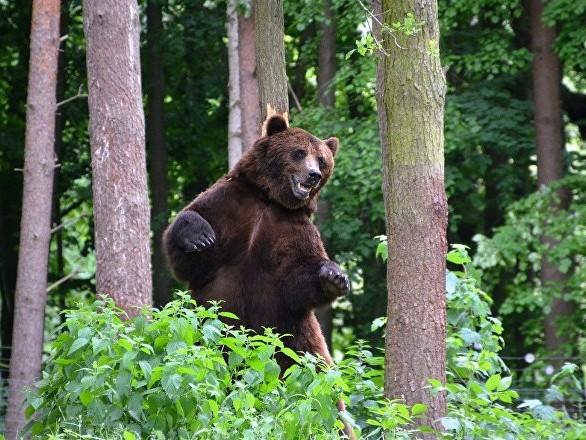 Un ours s'invite chez un Américain pour prendre le goûter dans le Tennessee - vidéo