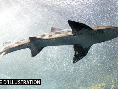 Bassin d'Arcachon: une plage évacuée à cause de la présence d'un requin