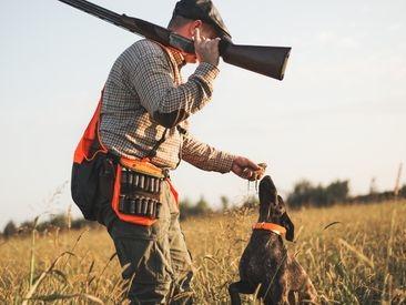 """158 sangliers ont été tués lors d'une battue, la fédération de chasse dénonce """"un carnage"""""""