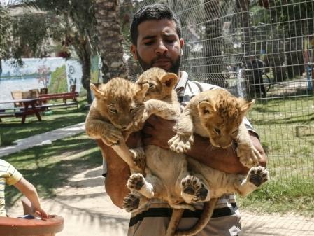 Le sinistre zoo de Gaza rouvre quelques mois après sa fermeture