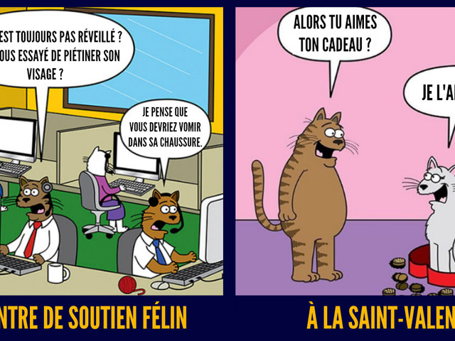 Top 15 des illustrations sur la vraie vie des chats par Scott Metzger, tout ce qu'on vous a caché