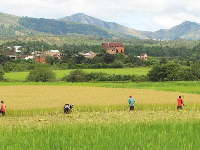 Madagascar sur le chemin de l'autosuffisance alimentaire?