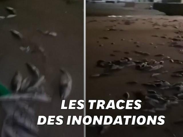 Après la tempête Gloria, une plage espagnole recouverte de poissons morts