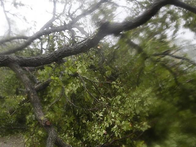 Drame à La Roche-en-Ardenne: un bûcheron perd la vie, écrasé par l'arbre qu'il abattait