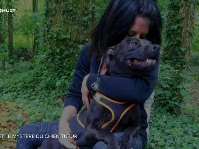 Mort d'Elisa Pilarski : son chien Curtis unique coupable selon deux experts