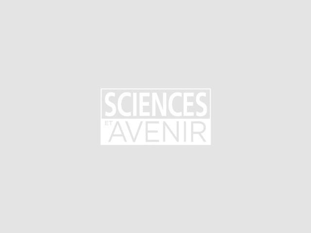 Les criquets, dernière plaie d'une Afrique de l'Est accablée par des variations climatiques extrêmes