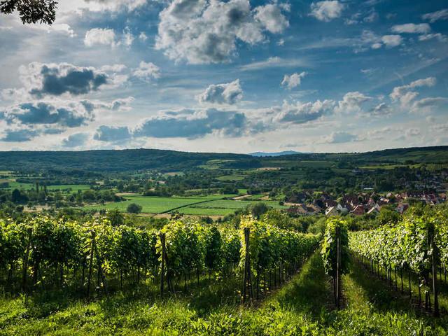 Les plus belles routes des vins en France