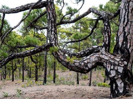La Huppe galante a fait sa rentrée avec un «caf'contes» fertile sur le thème de l'arbre