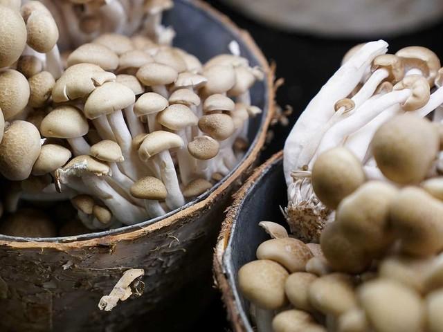 Intoxications aux champignons : 22 morts et 10 000 cas entre 2010 et 2017
