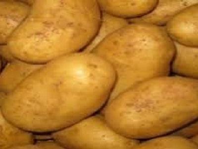 Agriculture : une croissance de 13,6% de la production de pommes de terre de saison