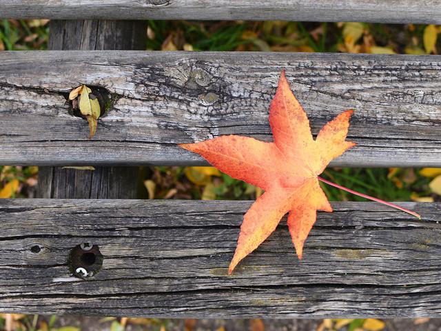 Dépression saisonnière : 4 fleurs de Bach pour l'oublier