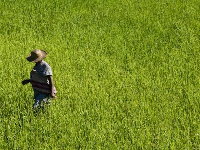 Madagascar: les prix du riz s'envolent