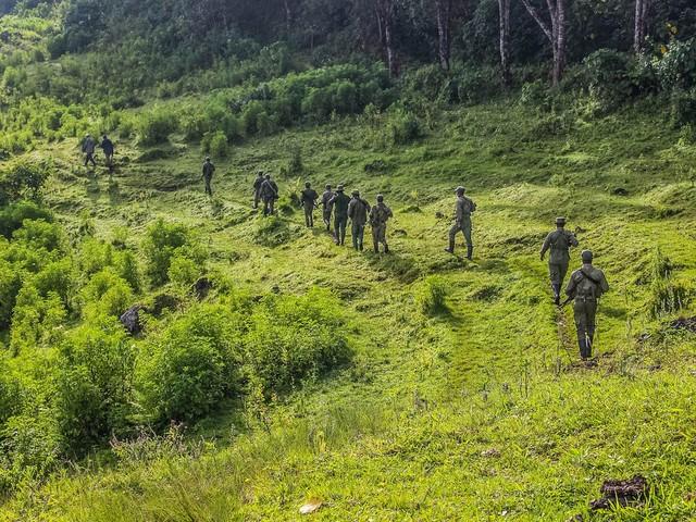 RDC : les ressources naturelles du parc des Virunga servent à financer les groupes armés dans l'Est