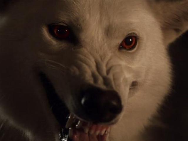 Game of Thrones : une bataille avec des loups géants était prévue