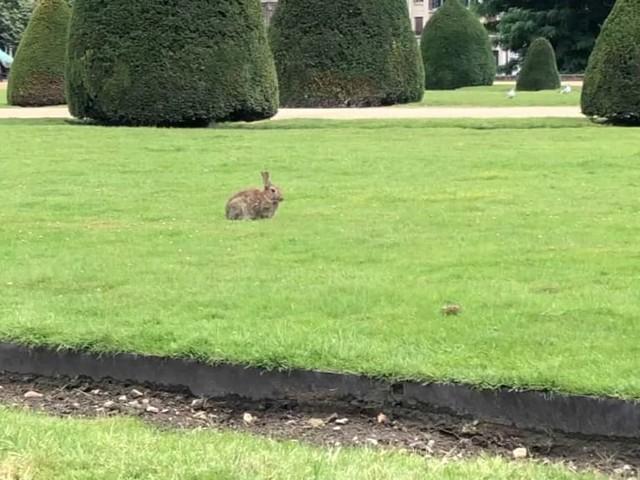 Paris: les lapins autorisés à rester sur la pelouse des Invalides