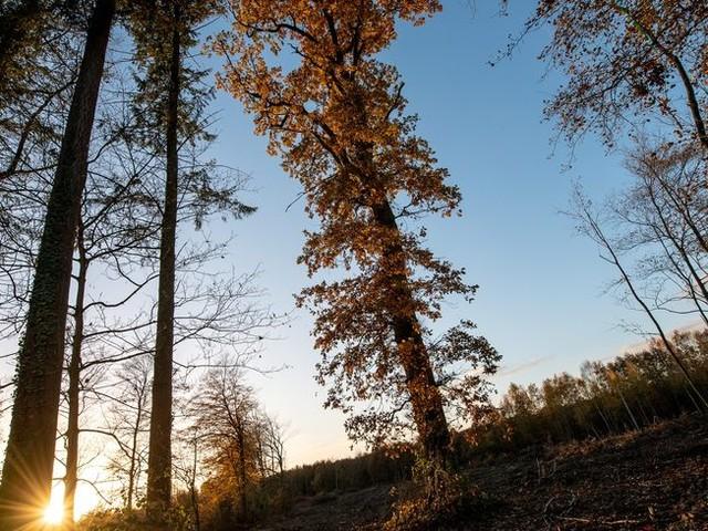 Le corps d'un homme découvert dans la forêt de Sainte-Menehould
