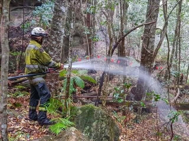 """En Australie, des arbres """"dinosaures"""" sauvés des incendies"""