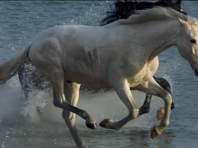 Foals fait durer le plaisir