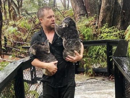 Feux de forêt en Australie - Australie: les orages éteignent les incendies de l'est