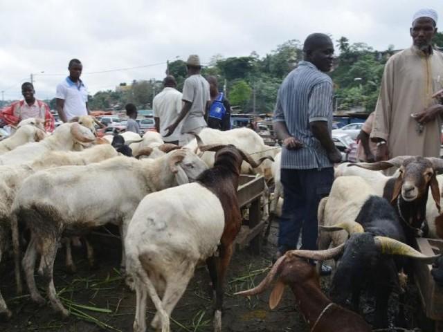 [Reportage] Les Gambiens se préparent à fêter la Tabaski