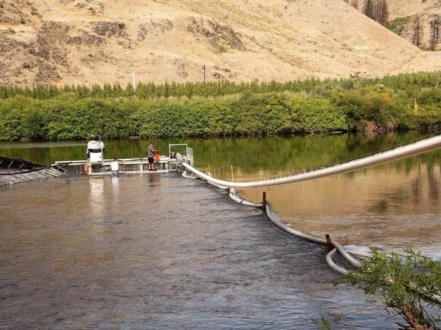 Science décalée : un canon à saumon devient viral sur Internet