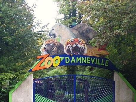 Moselle : le zoo tronçonne le cadavre d'un ours polaire pour le faire disparaître à la déchetterie