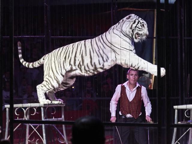 L'abattage d'un tigre en plein Paris relance le débat sur les animaux de cirque