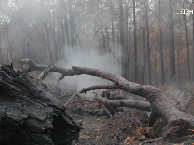 Pluies et orages en Australie : un début de soulagement pour les habitants