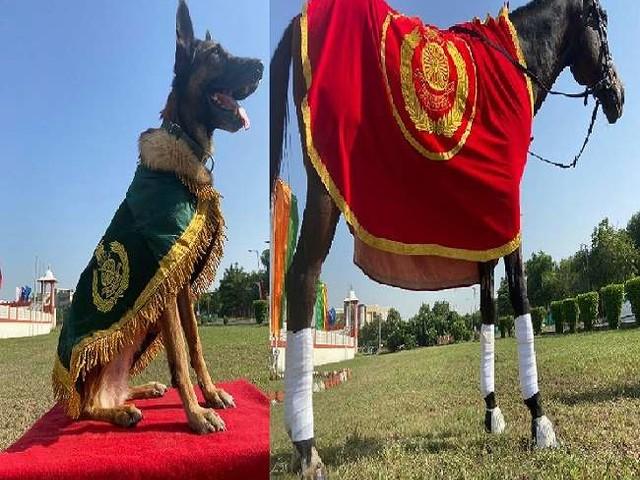 आइटीबीपी ने अपने सर्वश्रेष्ठ डाग और घोड़ा को विशेष पदकों से नवाजा, जानें क्या है इन दोनों की खासियत