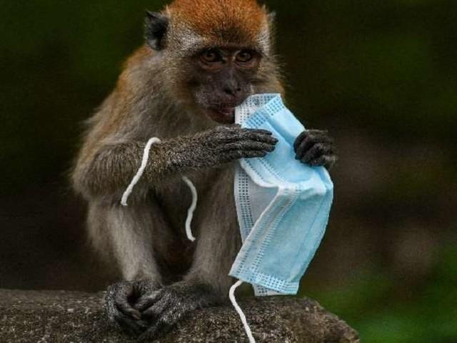 छत्तीसगढ़ में बंदरों को गोली मार रहे हैं निजी शूटर, ग्रामीणों पर आरोप, जांच जारी