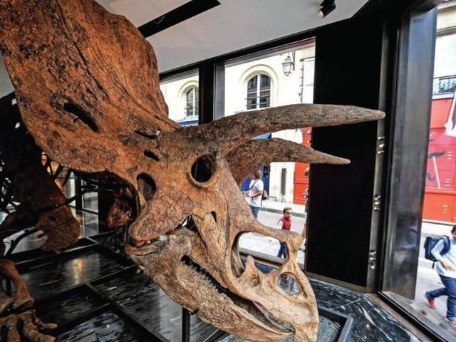 ഭീമൻ ട്രൈസെറാടോപ്സ് ദിനോസറുകളുടെ ഫോസിലിന് ലേലത്തിൽ 57 കോടി രൂപ