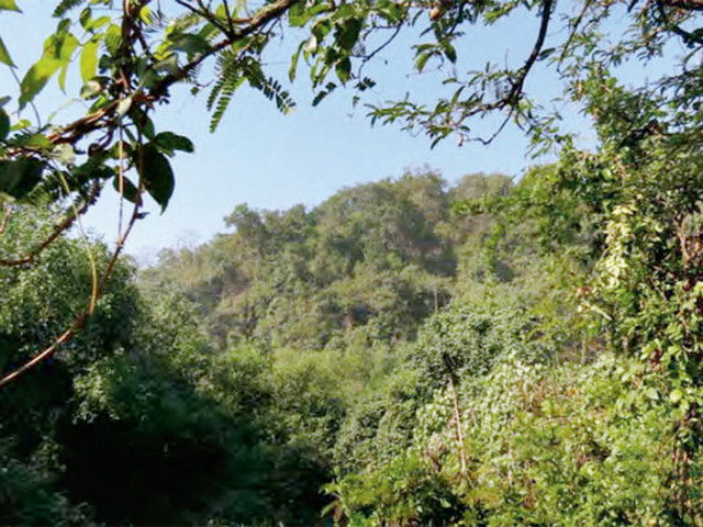 A visit to Nagla Block in the Sanjay Gandhi National Park will be a treat for nature lovers