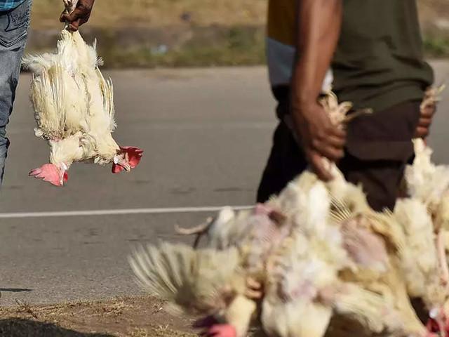 Maharashtra starts toll free number for bird flu