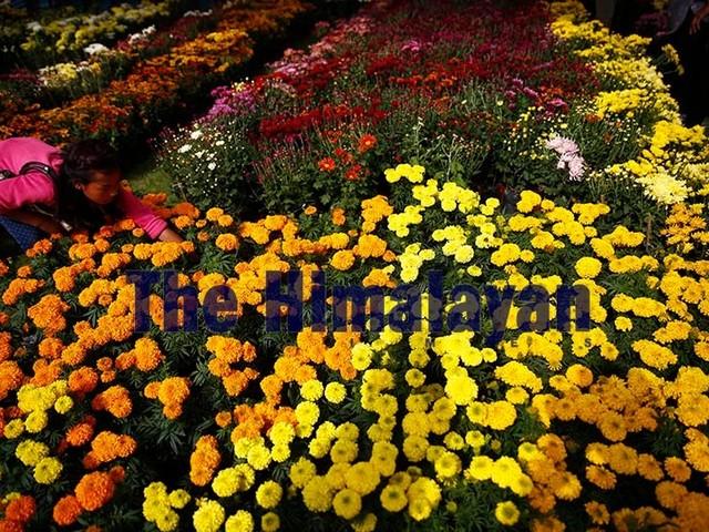 13th Godavari Flower Exhibition begins