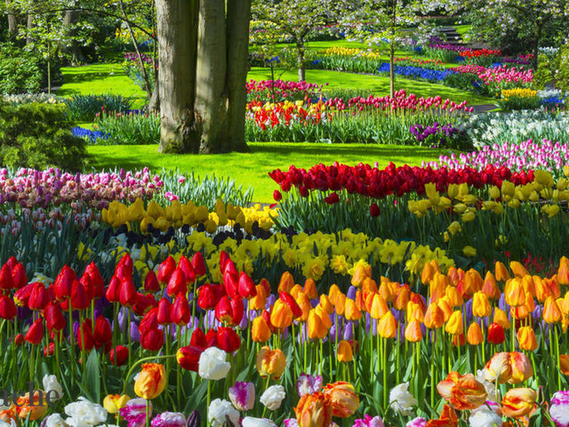 From Srinagar's Tulip festival to Assam's Rongali Bihu, spring time fests you just can't miss out on