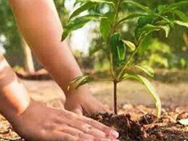 समझ में आया पेड़ों को महत्व तो बना दी नवजीवन फोर्स, बेटी का जन्म होने पर रोपते हैं 21 पौधे