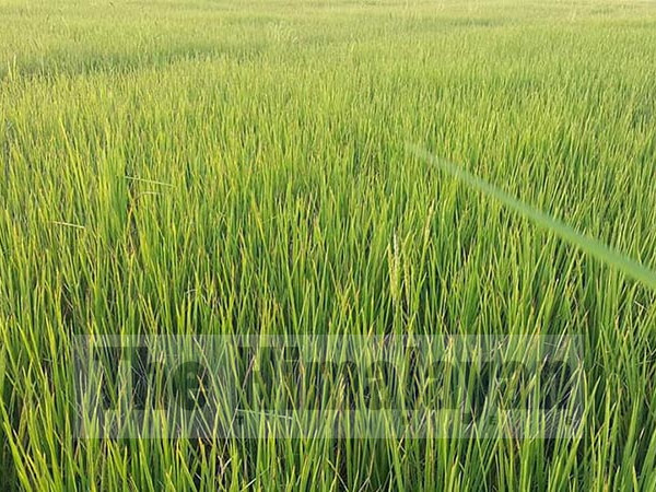 MoALD to provide compensation to victim farmers