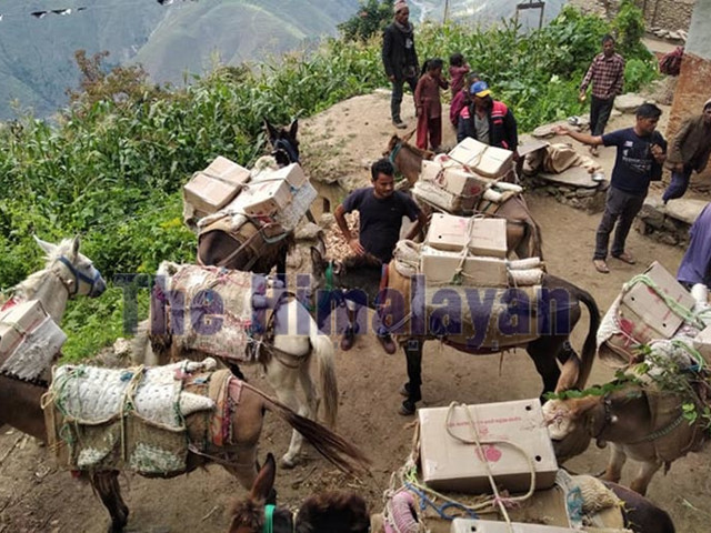Apples from Bajura to be sent to Kathmandu, Dhangadi
