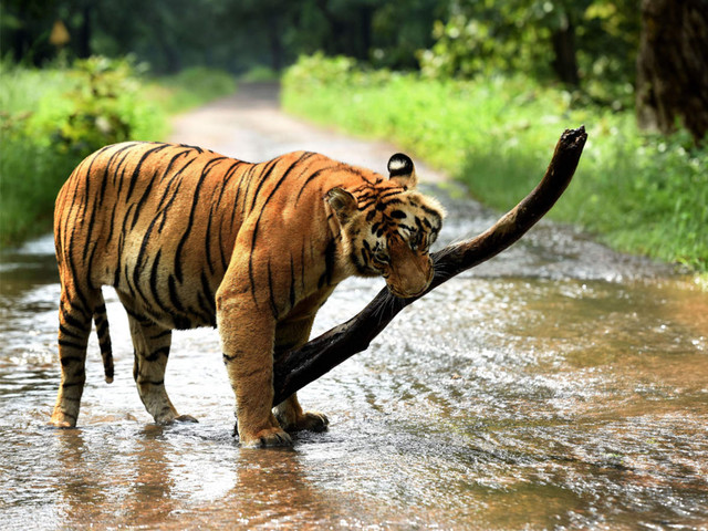 Why Assam Should Be Animal Lovers' Next Holiday Destination