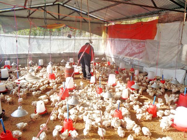 Chicken price rises