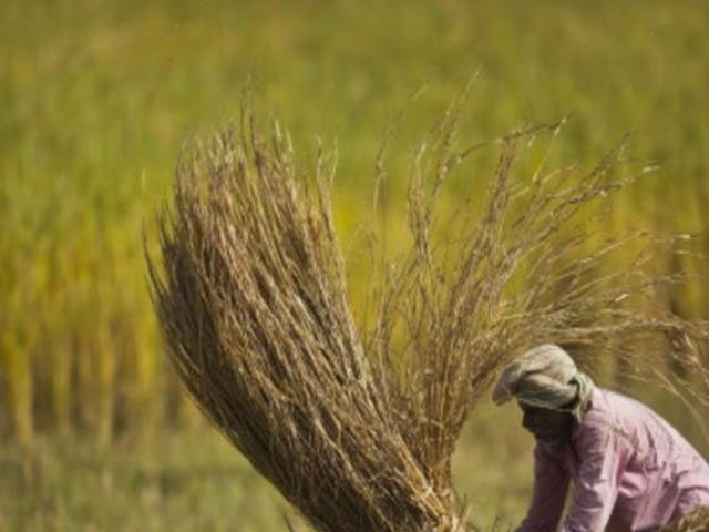 Poor rain may hit rural demand: Nestle CMD
