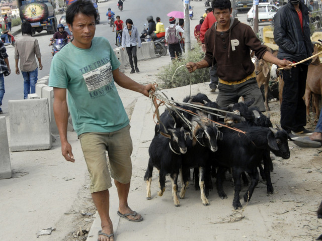NFC fixes goat price at Rs 510 per kg for Dashain
