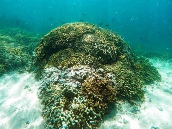 Pacific corals in 'worrying' state: Researchers