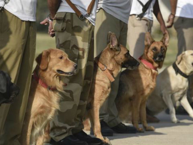 Dudhwa Tiger Reserve to have sniffer dog squad soon