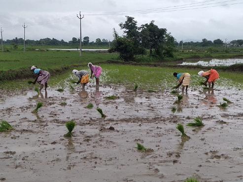 Adilabad sees spurt in agri activities